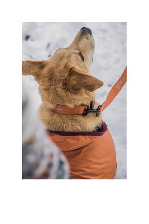 Nikita Dog Collar